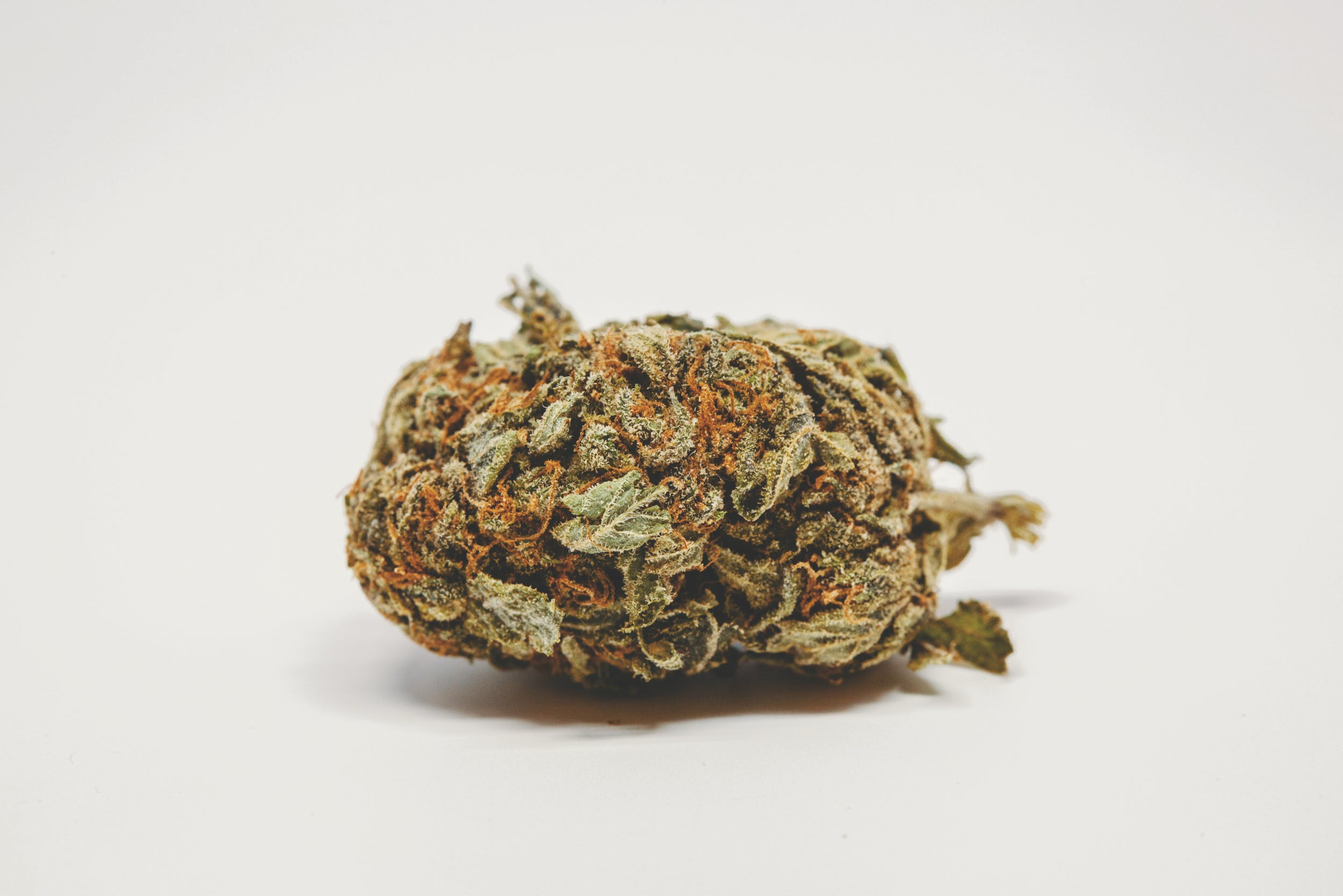 Best Kush Strains These are the Best Kush Strains on the Planet