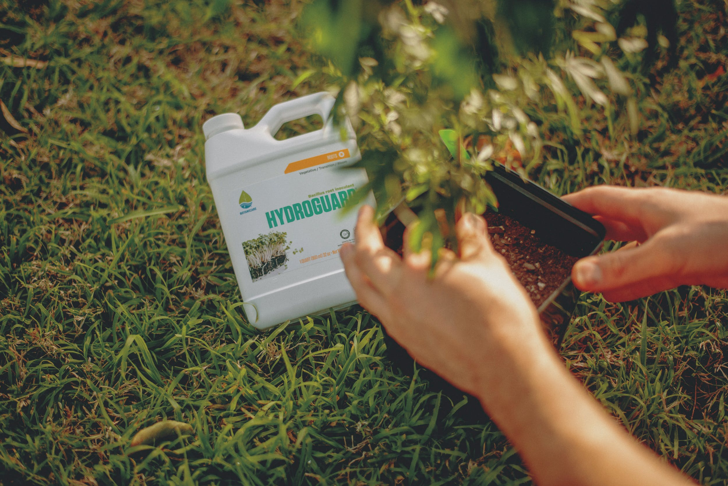 Best Weed Fertilizer 23 Grow Like a Pro with the Best Weed Fertilizers