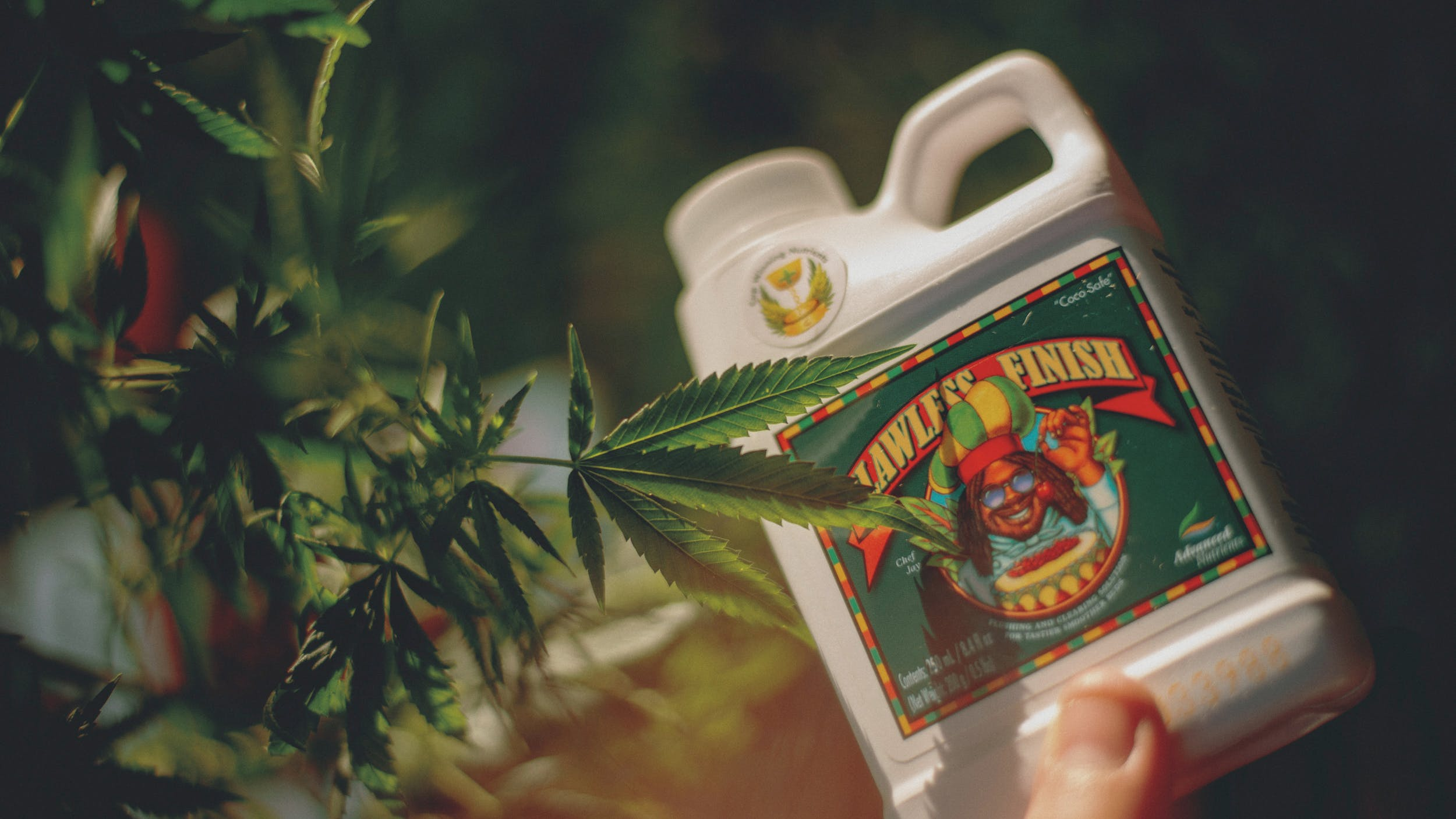 Best Weed Fertilizer 27 Grow Like a Pro with the Best Weed Fertilizers