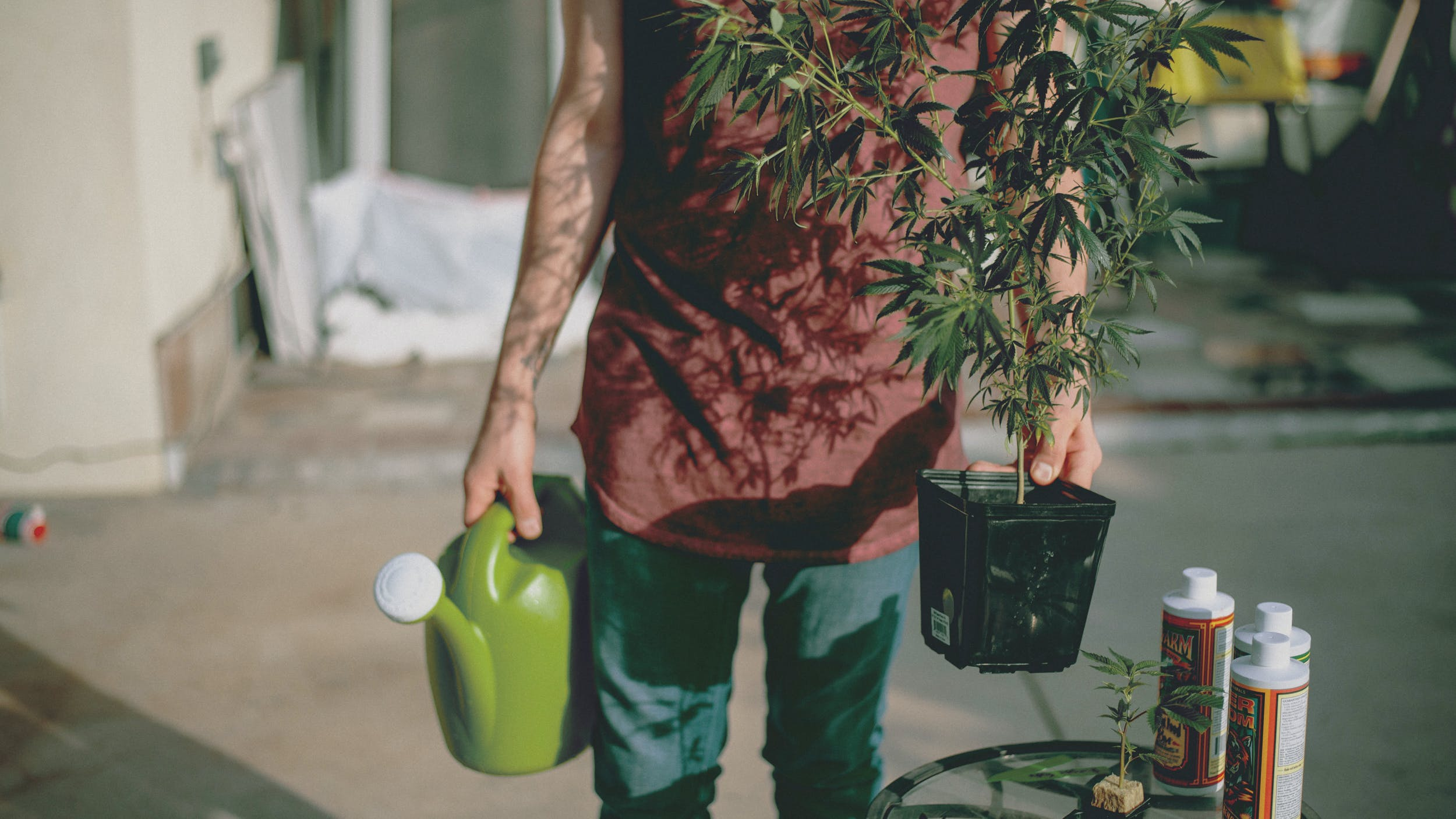 A man carries a watering can and a plant treated with the best weed fertilizers
