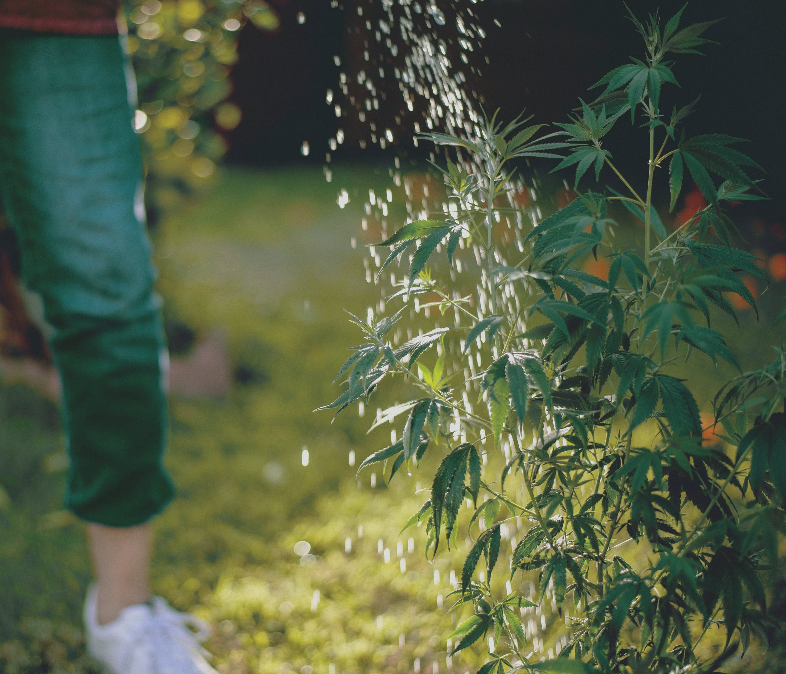 Best Weed Fertilizer 36 Grow Like a Pro with the Best Weed Fertilizers