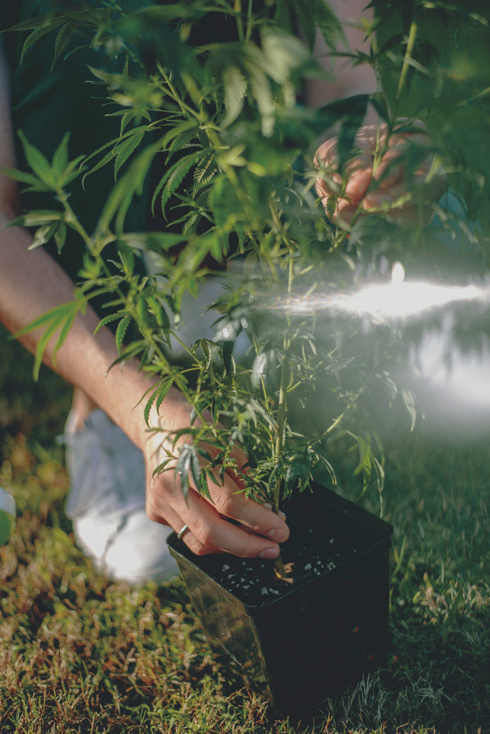 Best Weed Fertilizer 39 Grow Like a Pro with the Best Weed Fertilizers