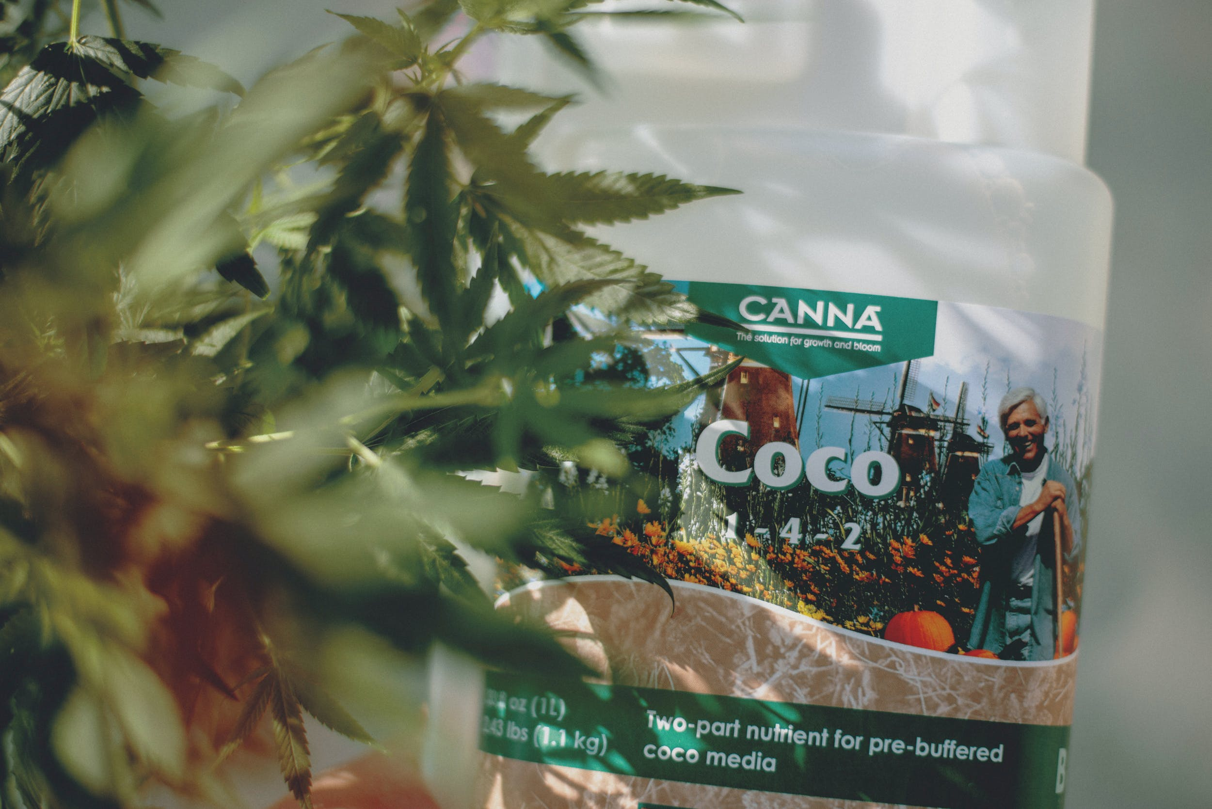 Best Weed Fertilizer 5 Grow Like a Pro with the Best Weed Fertilizers