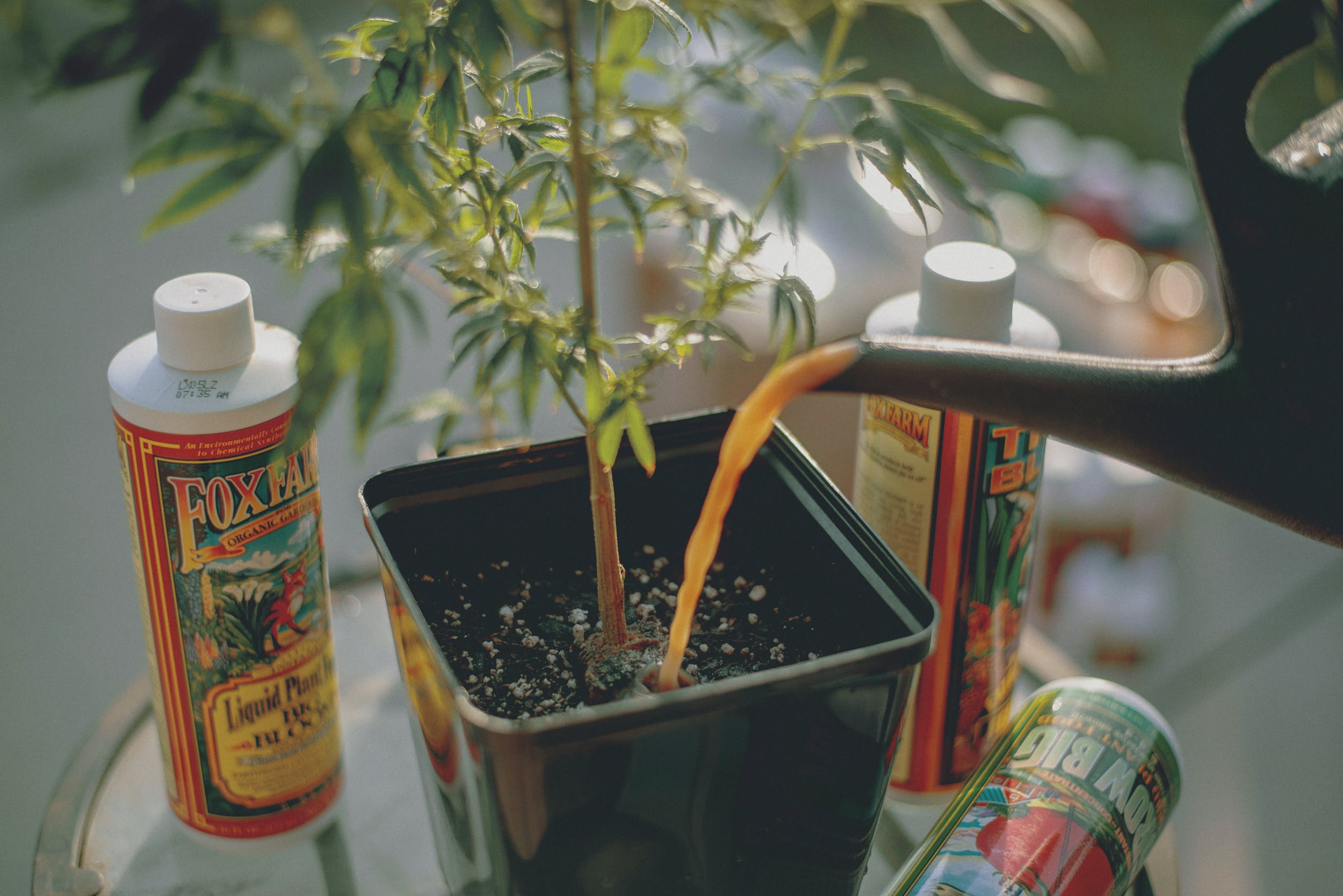 Best Weed Fertilizer 54 Grow Like a Pro with the Best Weed Fertilizers
