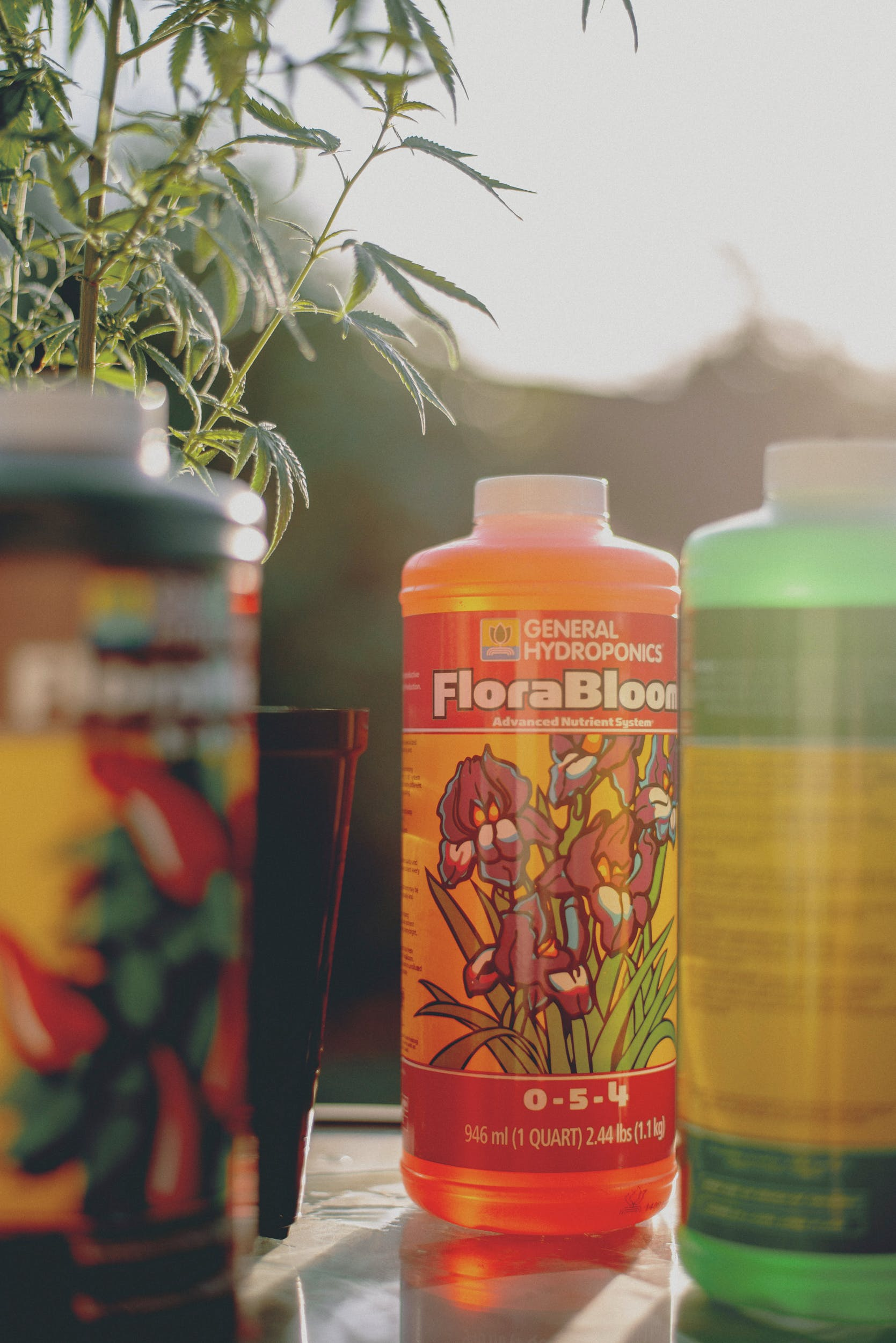 Best Weed Fertilizer 59 Grow Like a Pro with the Best Weed Fertilizers