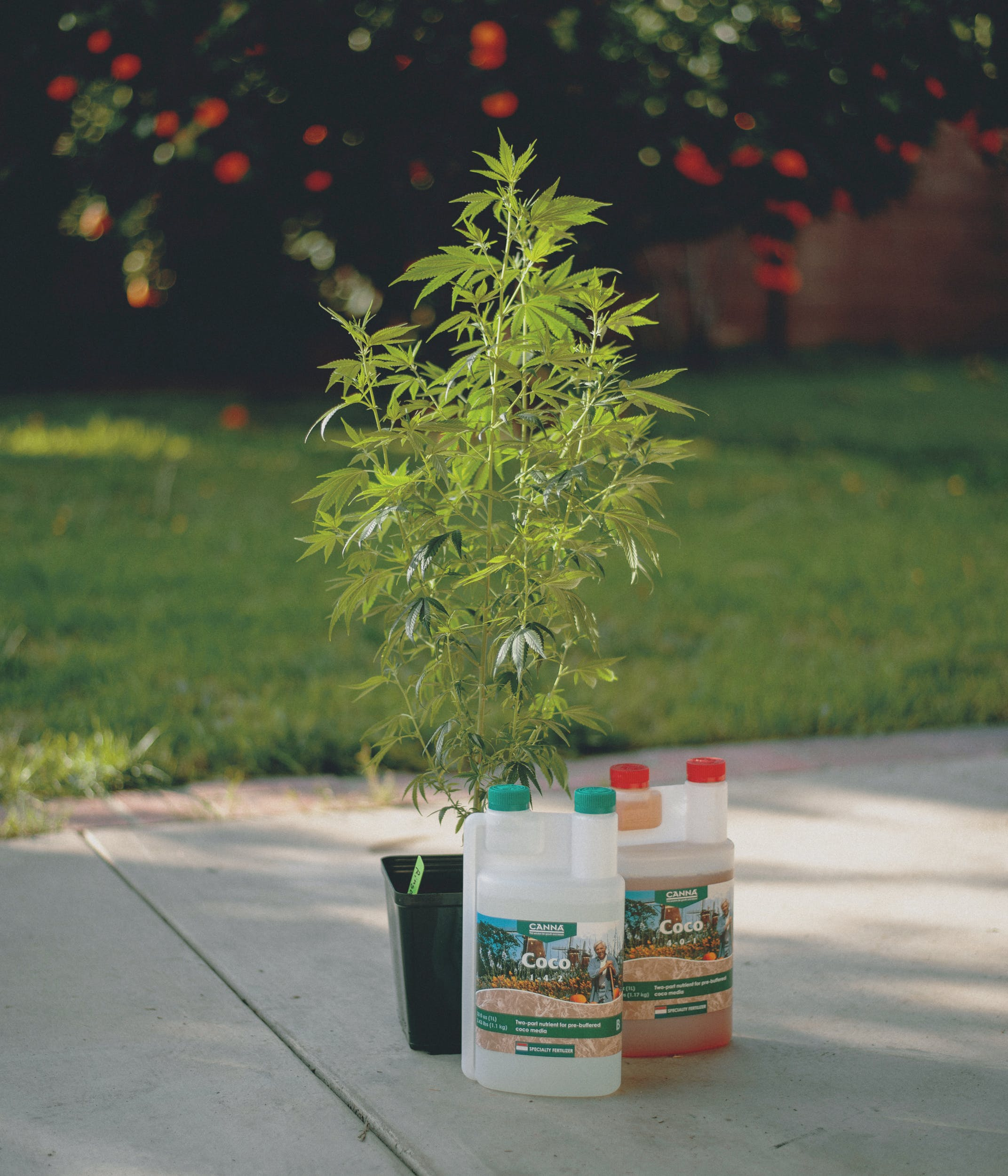 Best Weed Fertilizer 6 Grow Like a Pro with the Best Weed Fertilizers