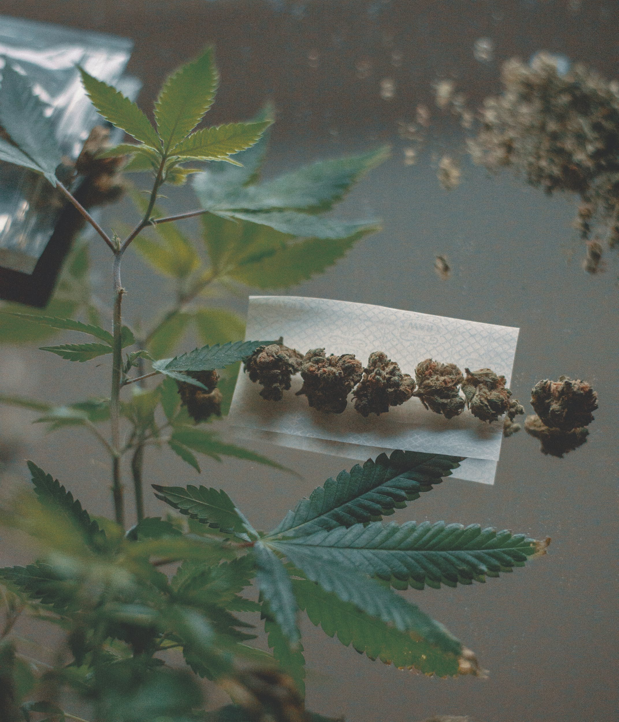 Best Weed Strains These are the Best Weed Strains in the World