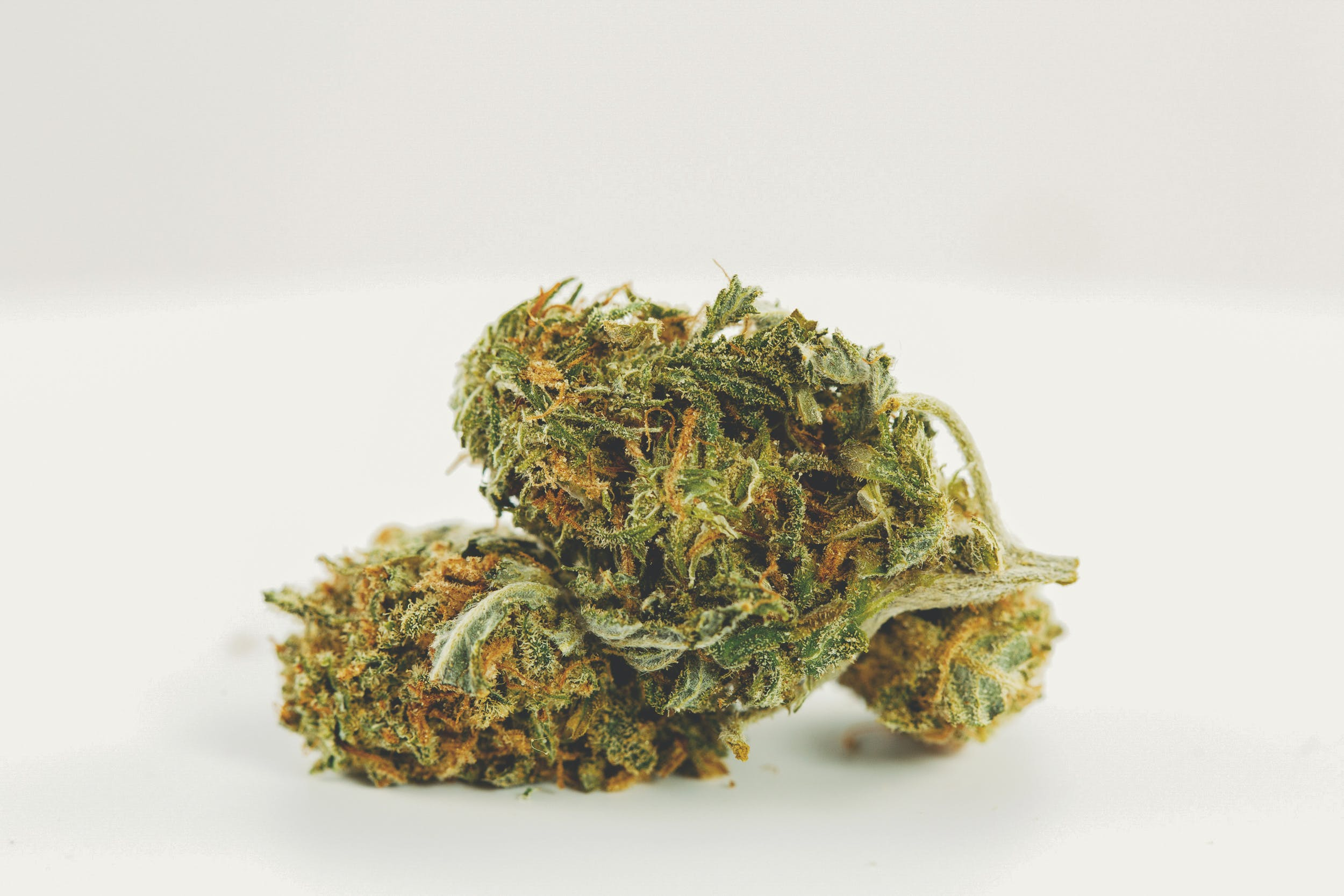 Girl Scout Cookies 1 These are the Best Weed Strains in the World