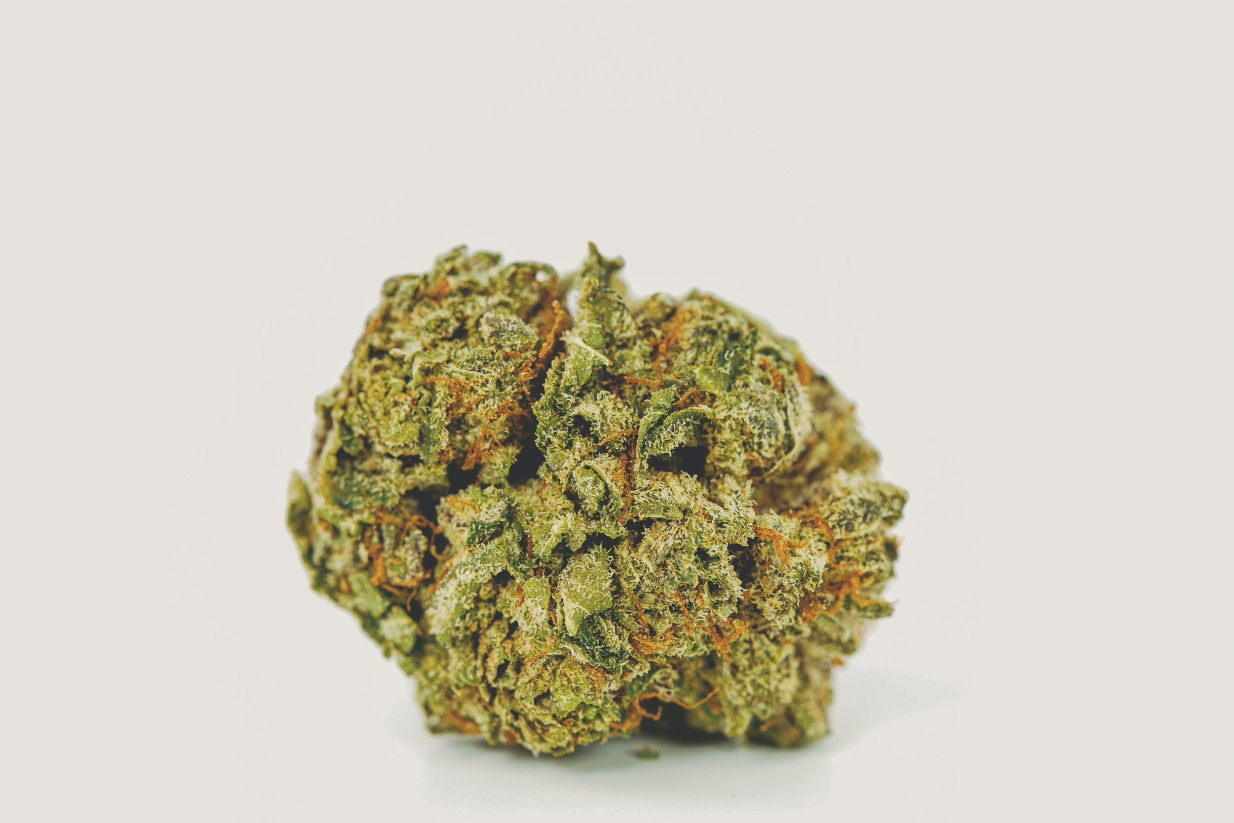 Grand Daddy Purple 1 These are the Best Weed Strains in the World