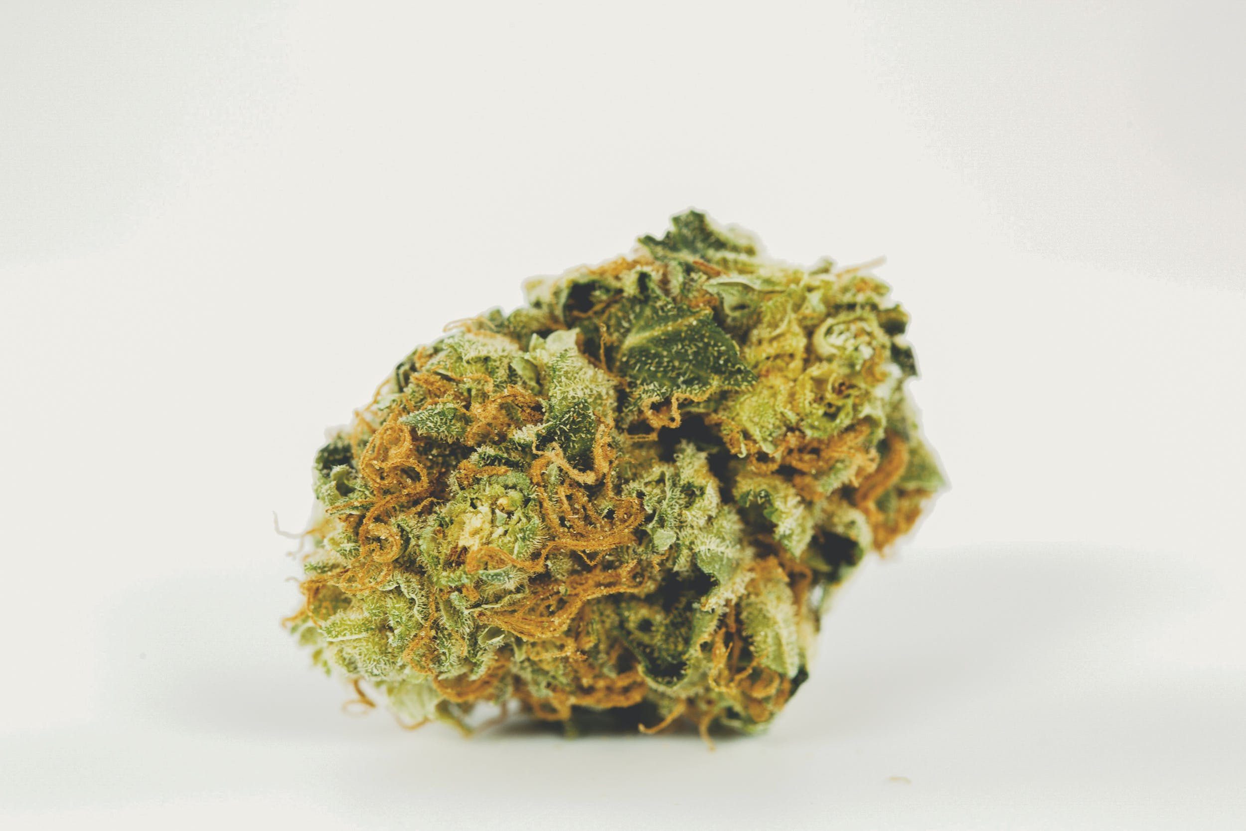 Strawberry Cough 1 These are the Best Weed Strains in the World