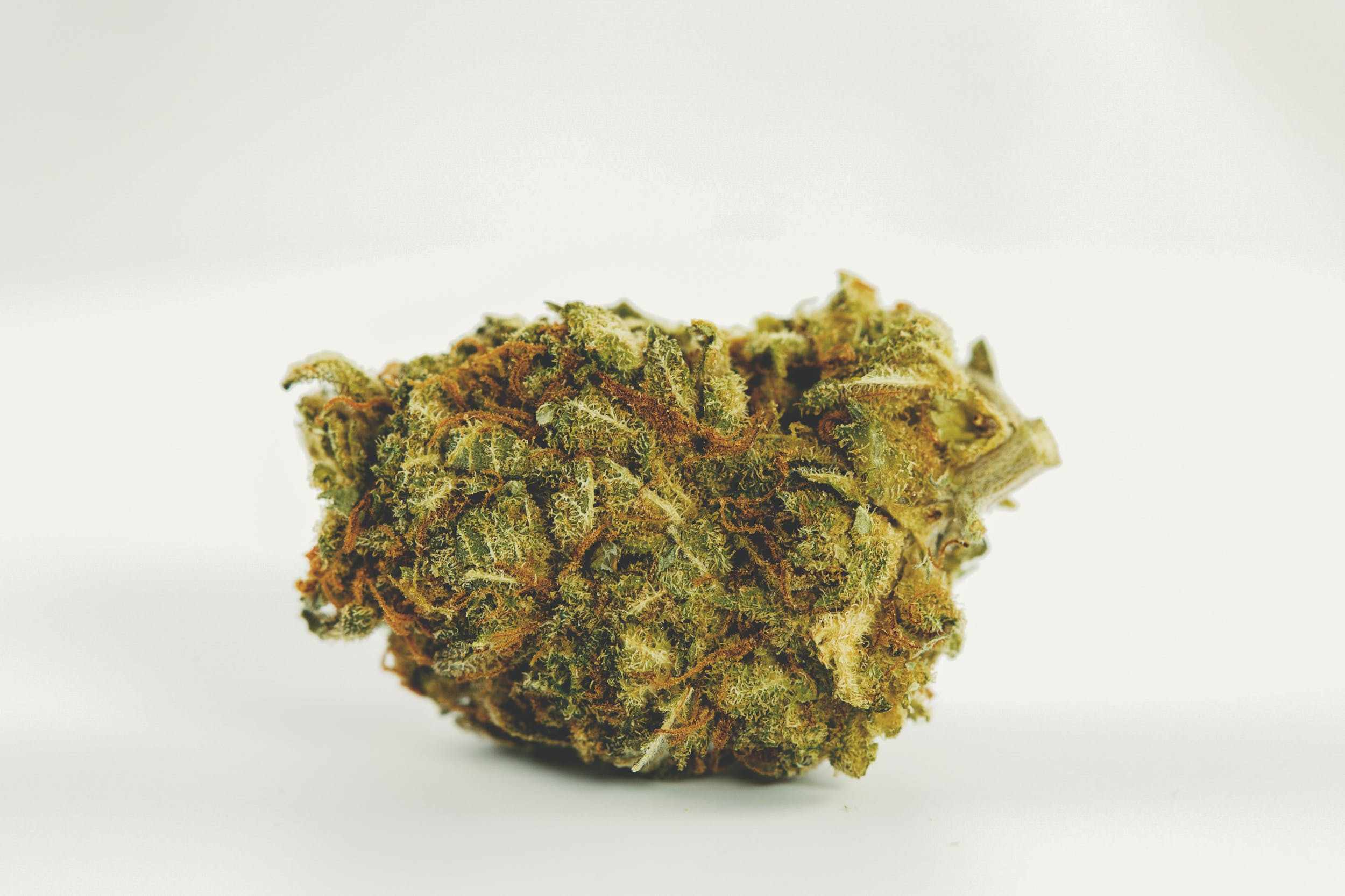 Tangie Ghost Train 1 These are the Best Weed Strains in the World