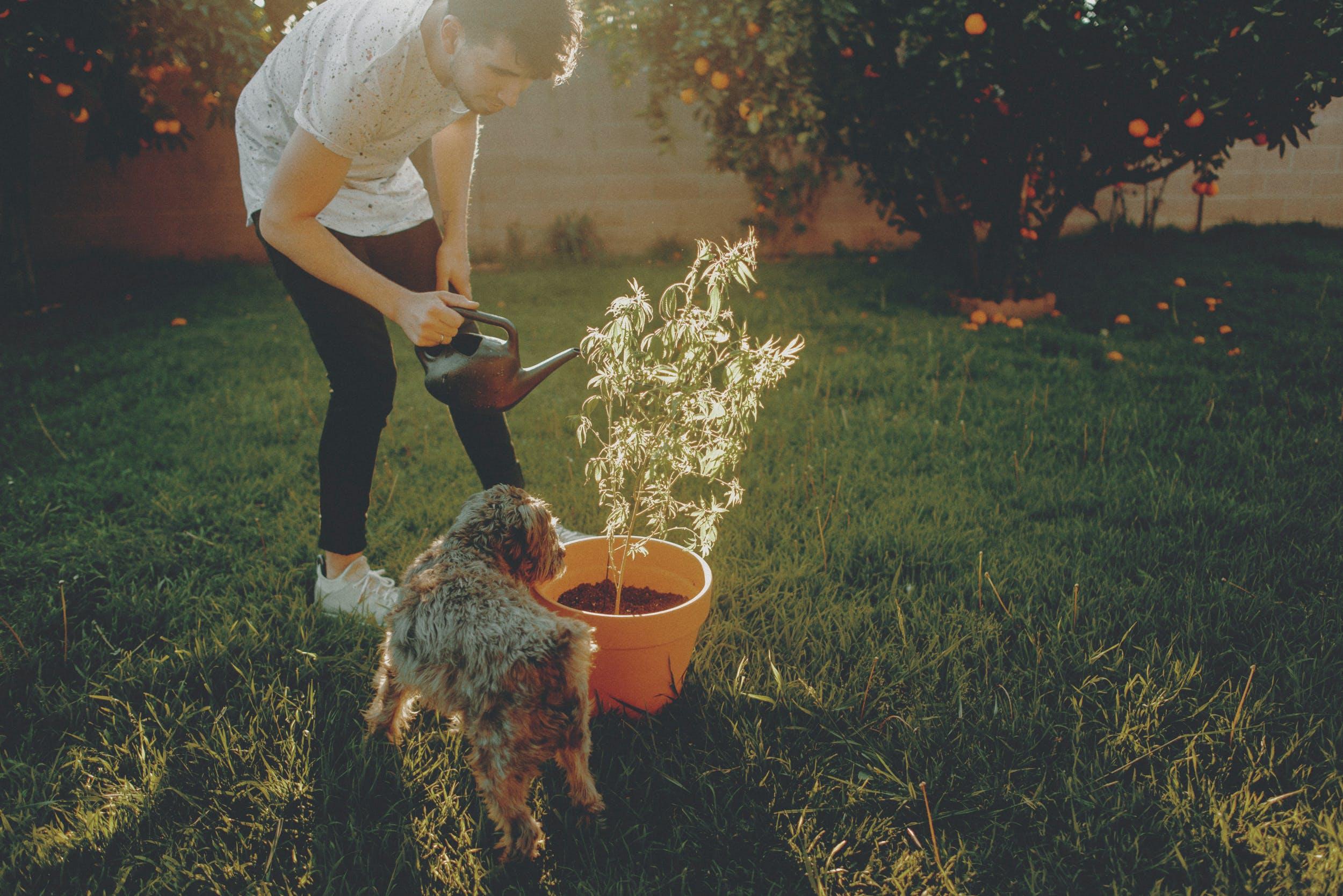 How to Make Super Soil 21 How To Make Super Soil And Grow Better Cannabis Plants