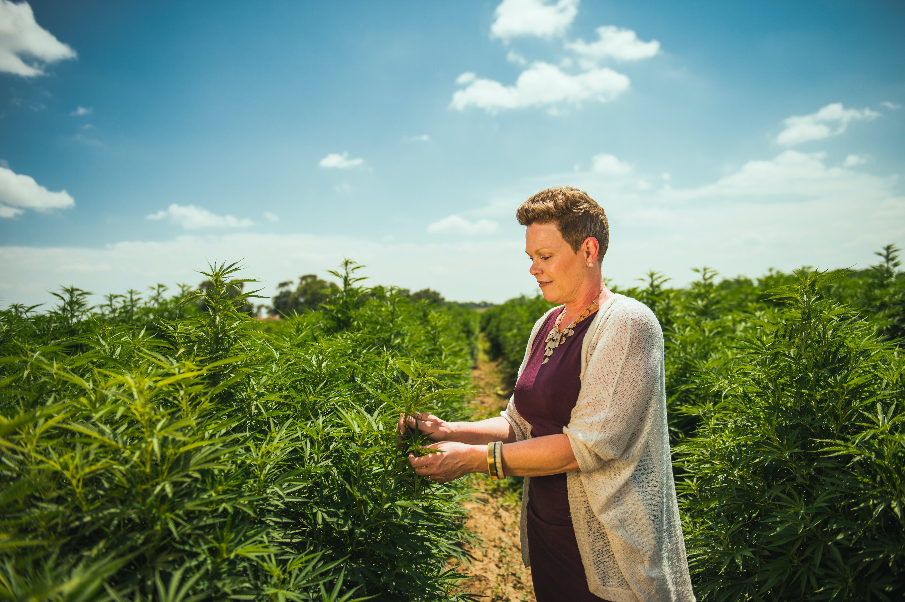A woman stands in a field of cannabis which supplies the best CBD Wholesalers