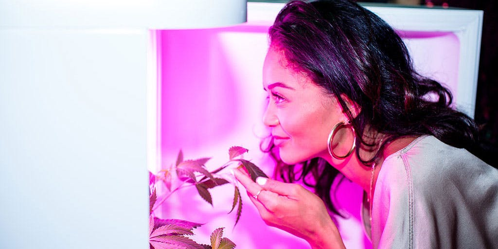A woman looks inside the Seedo machine which will allow her to grow cannabis at home